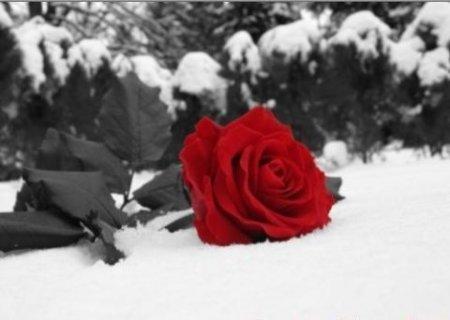 flor-vermelha